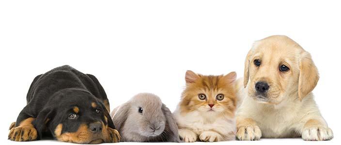 Tierbedarf
